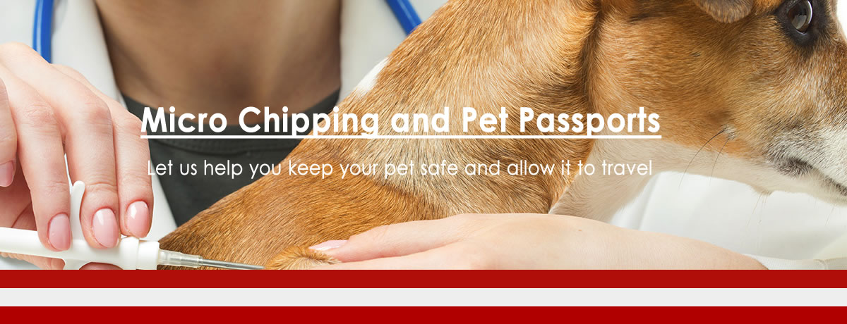Micro Chipping and Pet Passports